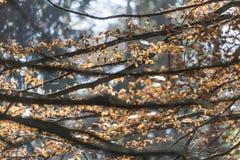 Beaucoup de branches horizontales dans le bois Photographie stock