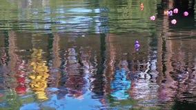 Beaucoup de canards en caoutchouc colorés en rivière avec des réflexions clips vidéos
