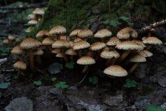 Beaucoup de champignons sur un tronçon Photo stock