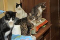 Beaucoup de chats Photographie stock