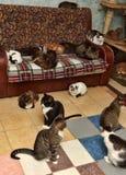 Beaucoup de chats Photos libres de droits