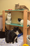 Beaucoup de chats Image libre de droits