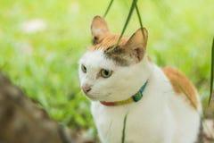 Beaucoup de chats bruns Image libre de droits
