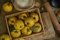 Beaucoup de coing de pomme avec la vaisselle de cuisine, se préparant au coing p Photo stock