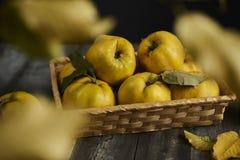Beaucoup de coing de pomme sur le fond en bois foncé Vue supérieure Photo stock