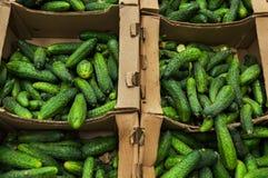 Beaucoup de concombres dans les paniers au marché Photographie stock libre de droits