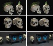 Beaucoup de crânes Photo libre de droits