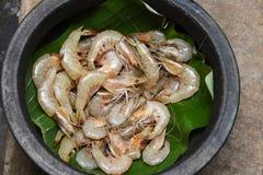 Beaucoup de crevettes roses de tigre dans un pot de boue, Kerala, Inde Photo libre de droits