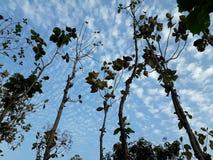 Beaucoup de beaucoup d'arbres secs pendant l'été photographie stock libre de droits