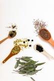 Beaucoup de différentes herbes médicinales dans des cuillères en bois sur un backg blanc Images libres de droits