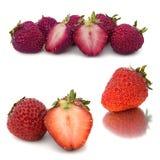 Beaucoup de différents ensembles de fraises sur le fond blanc, isolat avec des fraises, beaucoup différentes sur une feuille Photo libre de droits
