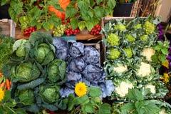 Beaucoup de différents genres de salades et de raisins dessus Photos stock