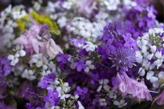 Beaucoup de différents genres de fleurs : phlox pourpre et violet, camomille blanche, cloches Photographie stock libre de droits