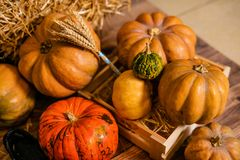 Beaucoup de différents potirons sur le plancher pour le décor pour la célébration de Halloween image stock