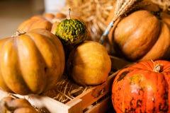 Beaucoup de différents potirons sur le plancher pour le décor pour la célébration de Halloween photo stock