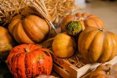 Beaucoup de différents potirons sur le plancher pour le décor pour la célébration de Halloween photographie stock libre de droits