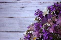 Beaucoup de différents types de fleurs : phlox pourpre et violet, marguerite blanche, cloches roses Images libres de droits