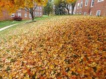 Beaucoup de feuilles à ratisser photo stock