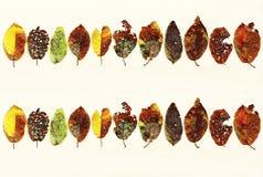 Beaucoup de feuilles colorées d'automne Photos libres de droits