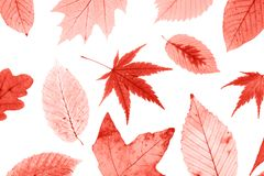 Beaucoup de feuilles d'automne colorées d'isolement sur le fond blanc photographie stock libre de droits