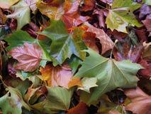 Beaucoup de feuilles d'automne multicolores ensemble 2 photos stock