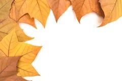 Beaucoup de feuilles d'automne sur un fond clair photos stock