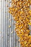 Beaucoup de feuilles de jaune au plancher en bois de terrasse Photos stock