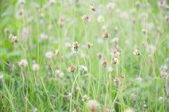 Beaucoup de fleurs d'herbe images stock