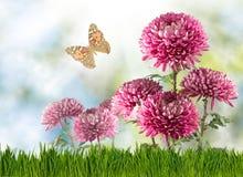 beaucoup de fleurs et de papillons dans le plan rapproché de jardin Photographie stock libre de droits