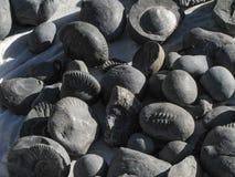 Beaucoup de fossiles en pierre antiques du Népal Photo libre de droits