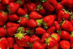 Beaucoup de fraises Images stock