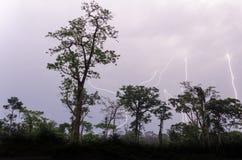 Beaucoup de grèves surprise pendant l'orage dramatique avec des silhouettes d'arbre de forêt tropicale dans le premier plan, Came Photographie stock libre de droits
