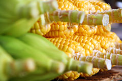 Beaucoup de grains frais Image stock