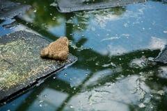 Beaucoup de grenouilles sont trouvées dans un étang dans une ferme de grenouille Photos libres de droits