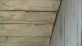 Beaucoup de guêpes volent autour dans la perspective de vieux conseils en bois Vespiary Avec un vrai bruit banque de vidéos