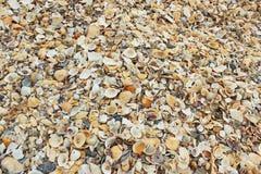 Beaucoup de mer écosse le fond de nature Photo stock