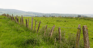 Beaucoup de moutons dans un pré vert en Irlande Images libres de droits