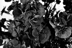 Beaucoup de noirs peu de fleurs sur un fond blanc photo libre de droits