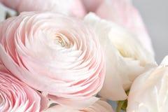 Beaucoup de pétales posés Renoncule persane Groupe pâle - le ranunculus rose fleurit le fond clair papier peint, photo verticale photographie stock