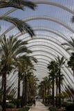 Beaucoup de palmiers Beaux endroits en Espagne image stock