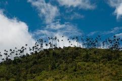 Beaucoup de palmiers sur une colline verte sous le ciel bleu Images libres de droits