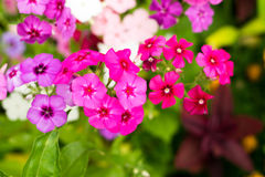 Beaucoup de petites fleurs avec les pétales colorés multi lumineux Macro Photos libres de droits