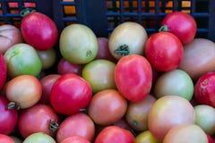 Beaucoup de petites tomates Photographie stock