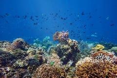 Beaucoup de petits poissons vibrants au-dessus d'un beau récif coralien Photographie stock