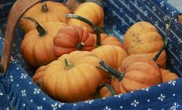 Beaucoup de petits potirons oranges dans un panier images libres de droits