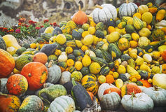 Beaucoup de petits potirons pour Halloween font la fête en vente Image libre de droits
