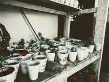 Beaucoup de petits pots sont sur les étagères décoration intérieure dans un café images stock