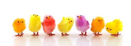 Beaucoup de petits poulets de Pâques Photographie stock