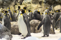 Beaucoup de pingouins au zoo Photo libre de droits
