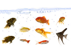 Beaucoup de poissons d'aquarium Photographie stock libre de droits